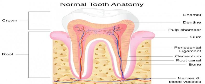 درمان ریشه (عصب کشی) مجدد دندان