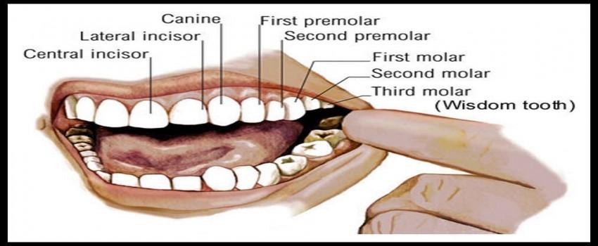 آناتومی دندان-موقعیت و سن رویش دندان